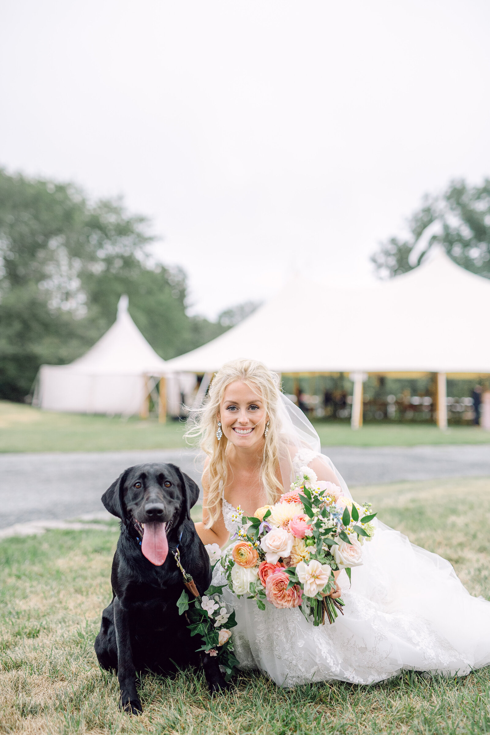 wedding_dog_4