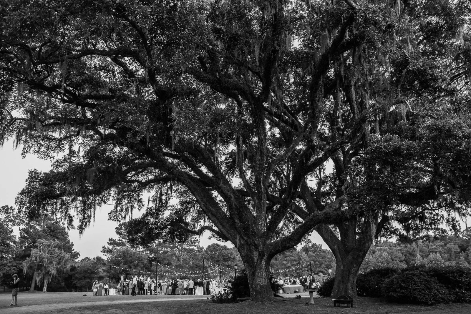 Guests dance at reception under oak tree, Oakland Plantation, Mt Pleasant, South Carolina