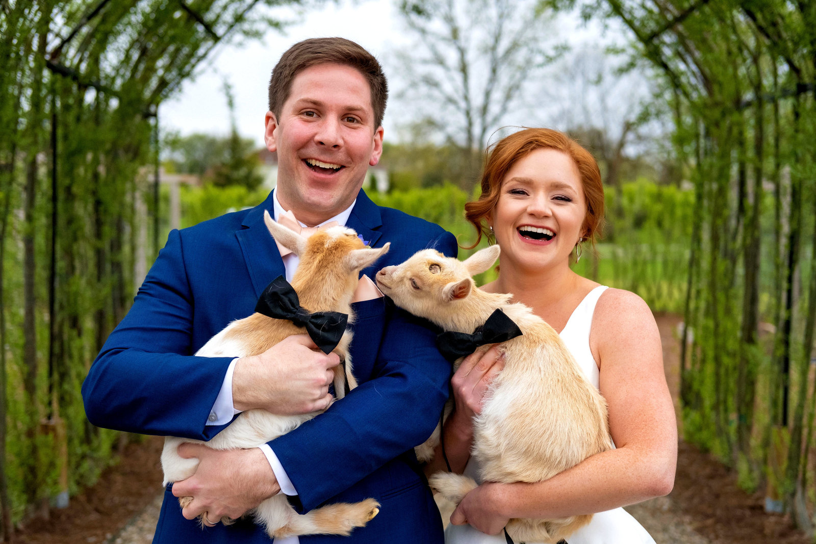 Wedding photo of a bride and groom smiling and holding baby goats at Cornman Farms