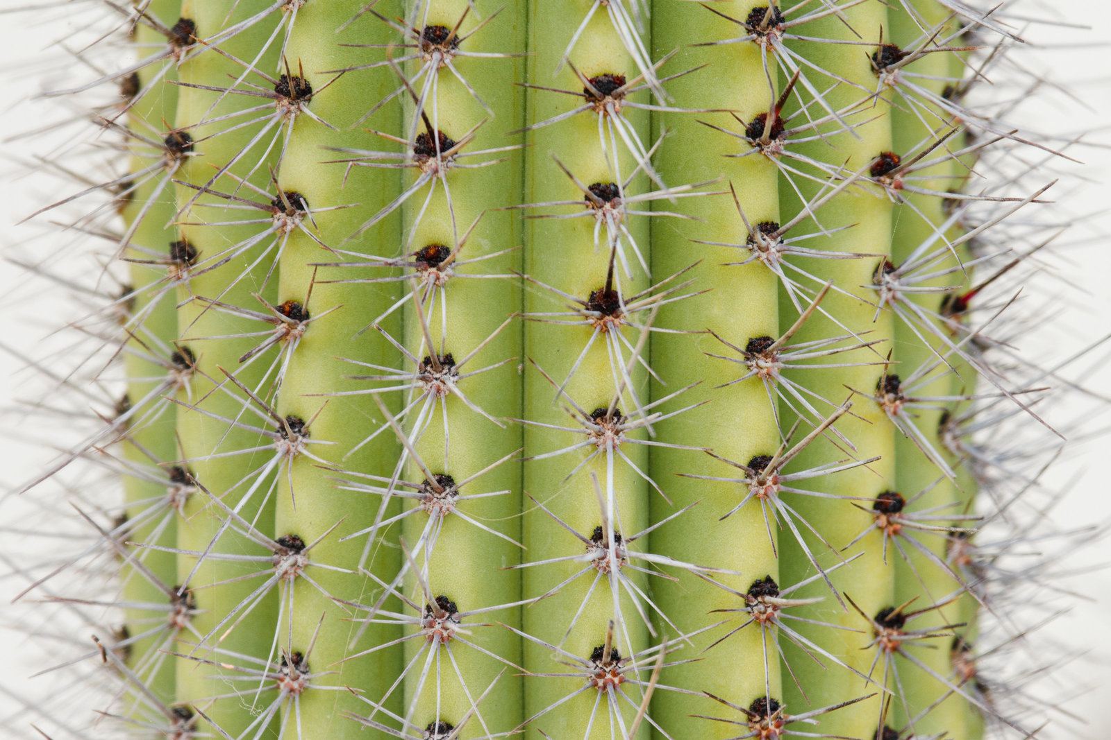 cameron-zegers-travel-photographer-mexico-cactus