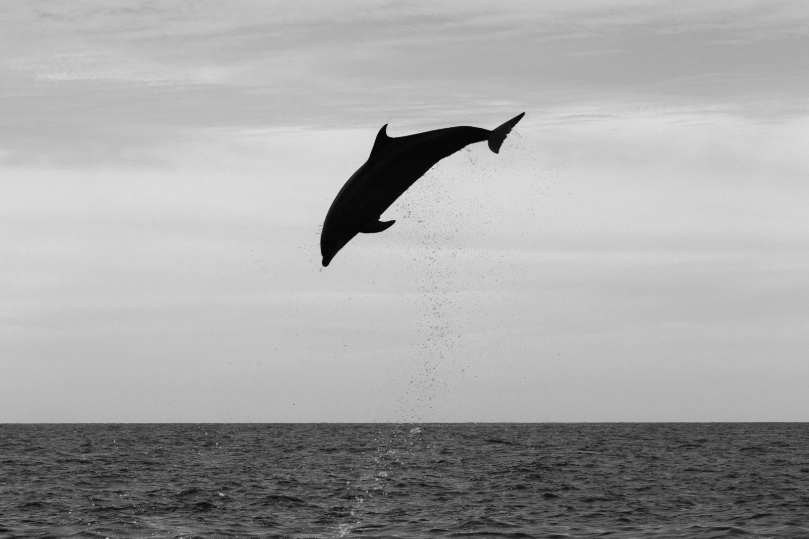 cameron-zegers-travel-photographer-baja-mexico-dolphin-jump