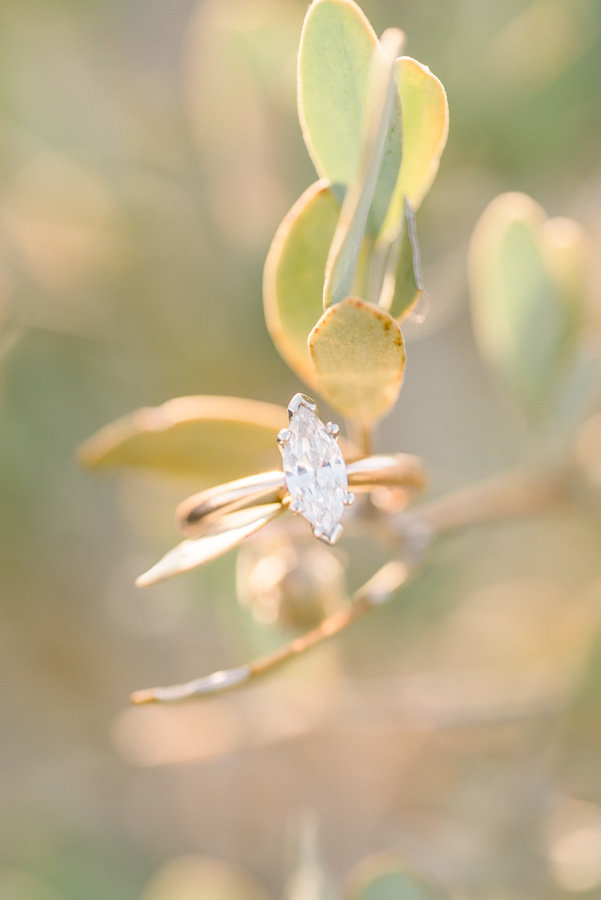 Tucson Gates Pass Engagement Session Photo of Gold Engagement Ring on a Green Plant | Tucson Wedding Photographer | West End Photography