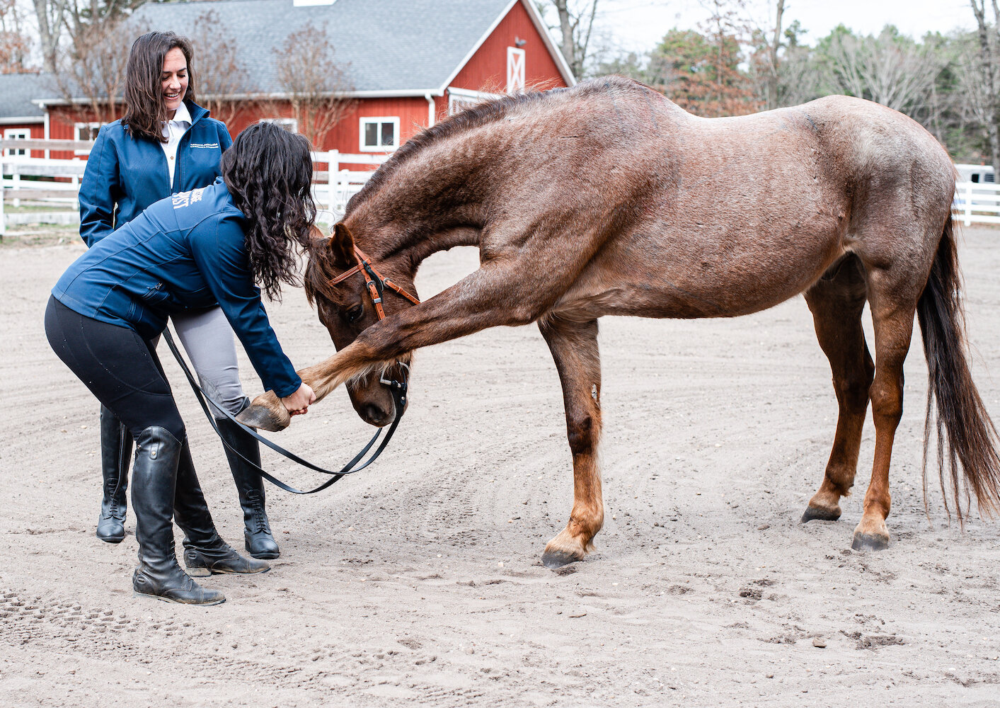Farm-and-Fir.Animal-Bodywork-and-Aromatherapy-Equestrian-Brand-Shoot.13