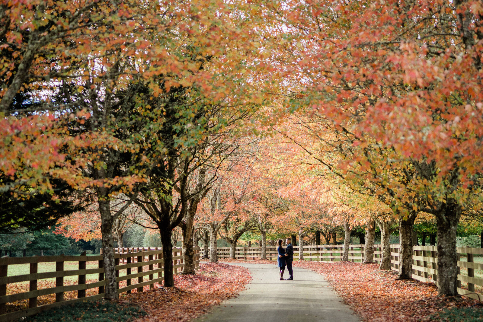 Long driveway, maple trees, autumn leaves and fall color during engagement pictures at Rockwood Farm