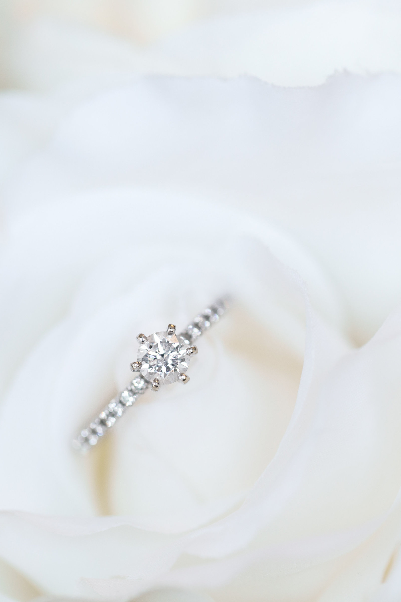 wedding-ring-rose-miami-wedding-photographers-Chris-and-Micaela-photography