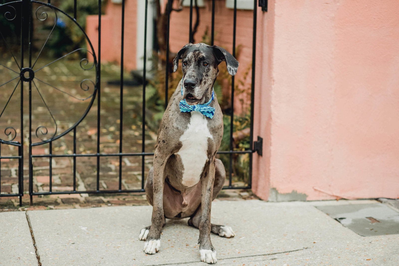 dog-lifestyle-fun-silly-portrait-candid-charleston-sc-kate-timbers-photography-10214