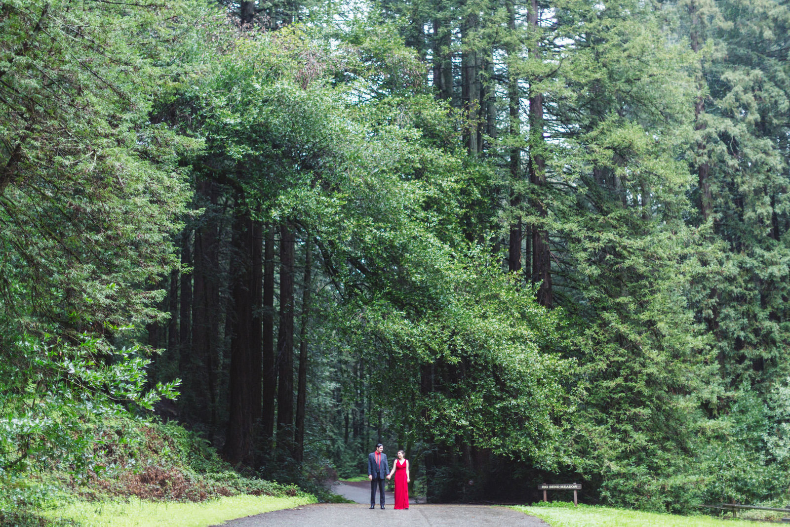 couple dwarfed by giant redwood trees at east bay redwood parks