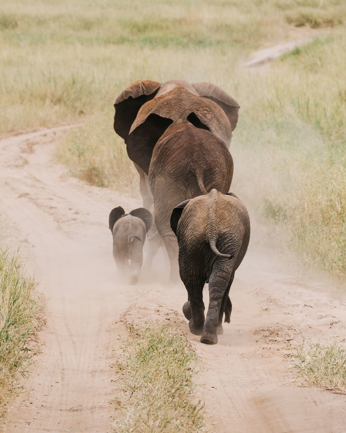cameron-zegers-travel-photographer-tanzania-national-geographic-expeditions-elephant