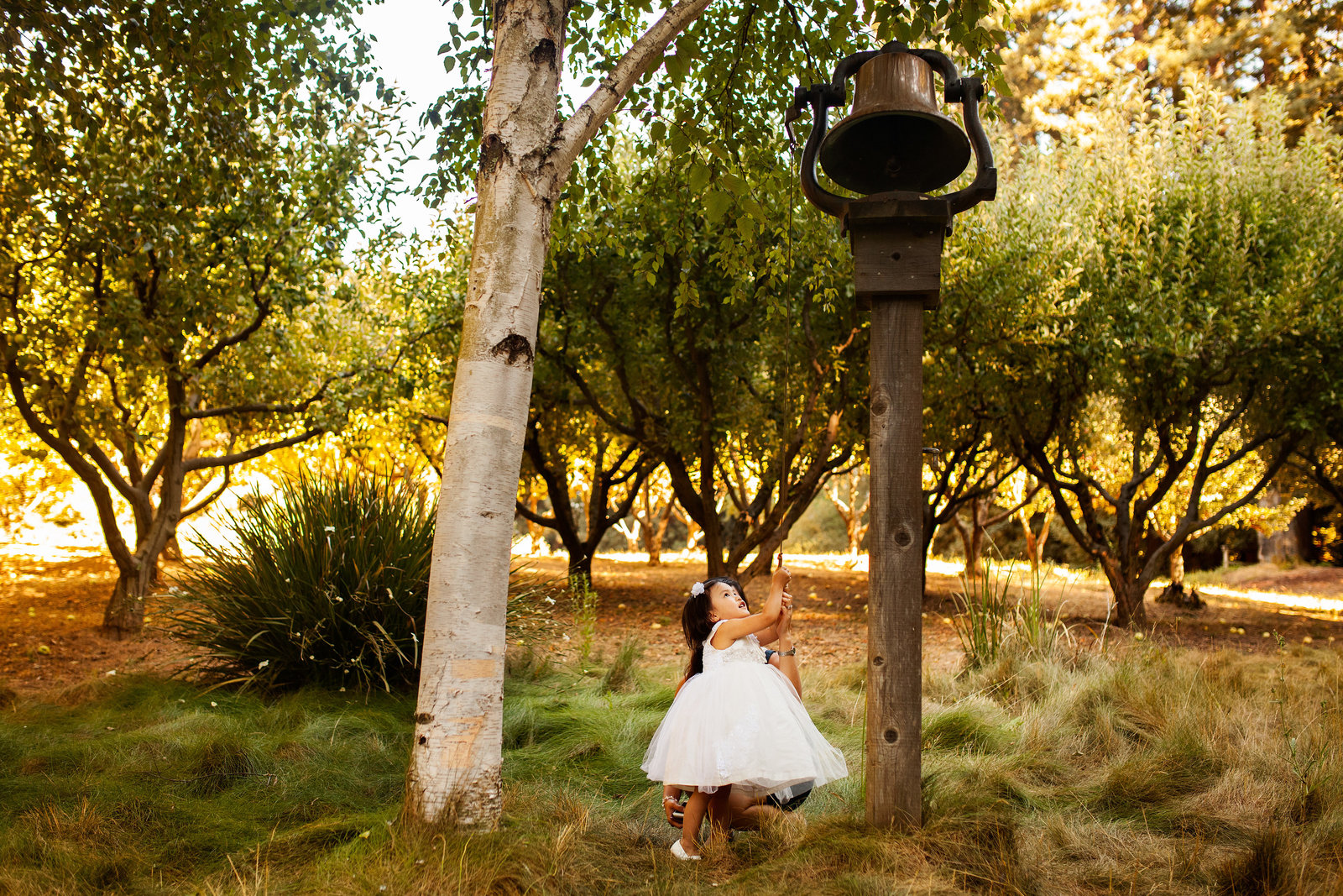 nestldown wedding forest los gatos california 12