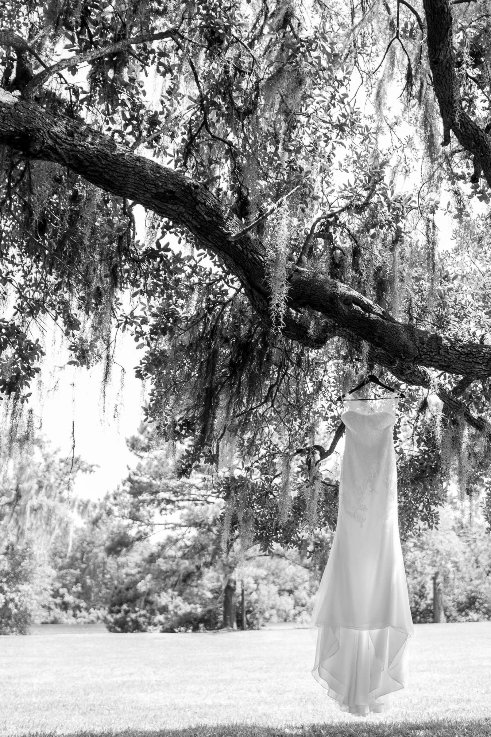 Wedding dress hangs from oak tree, Oakland Plantation, Mt Pleasant, South Carolina