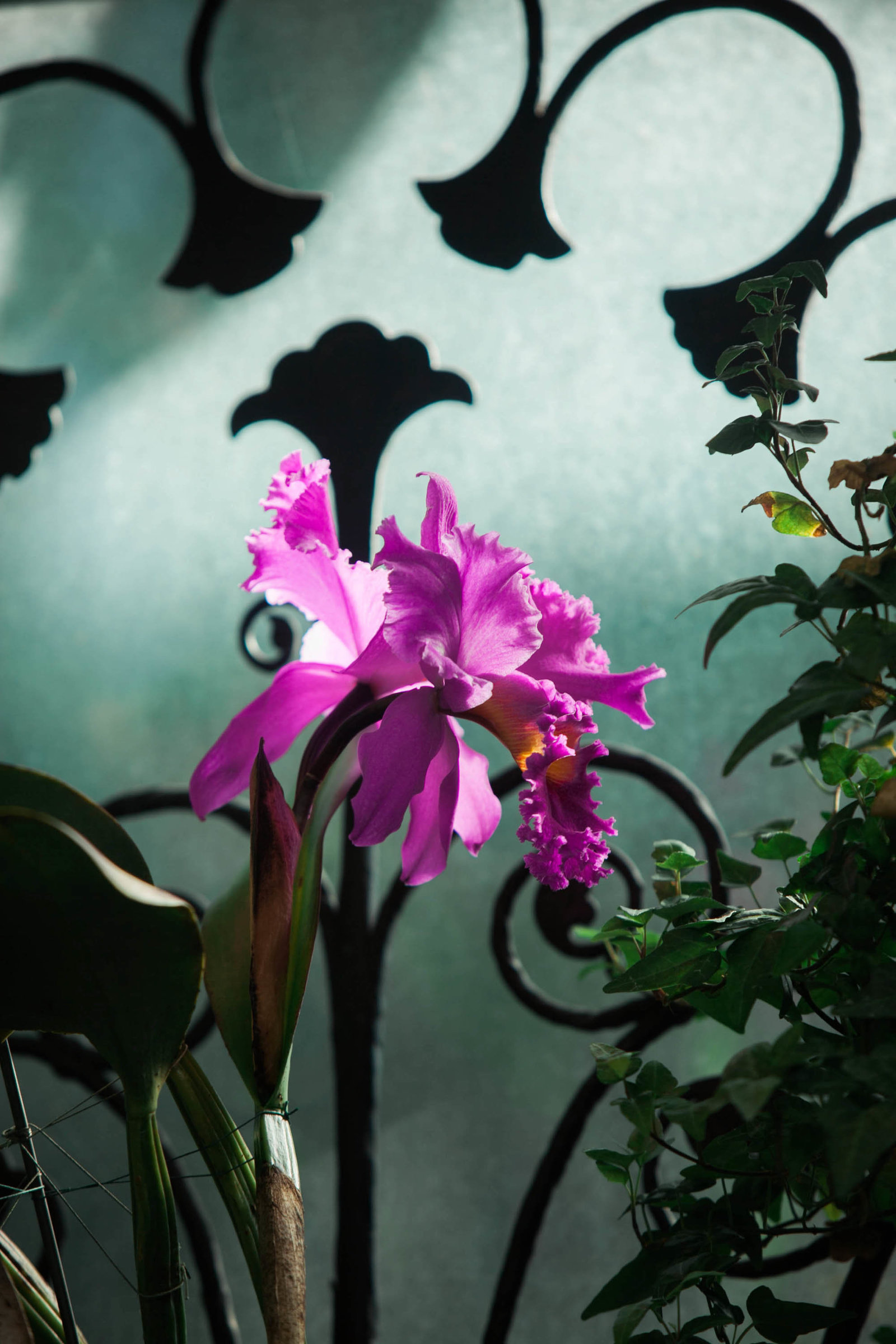purple-orchid-flower-garden-pennsylvania-nature-kate-timbers-photography-1416