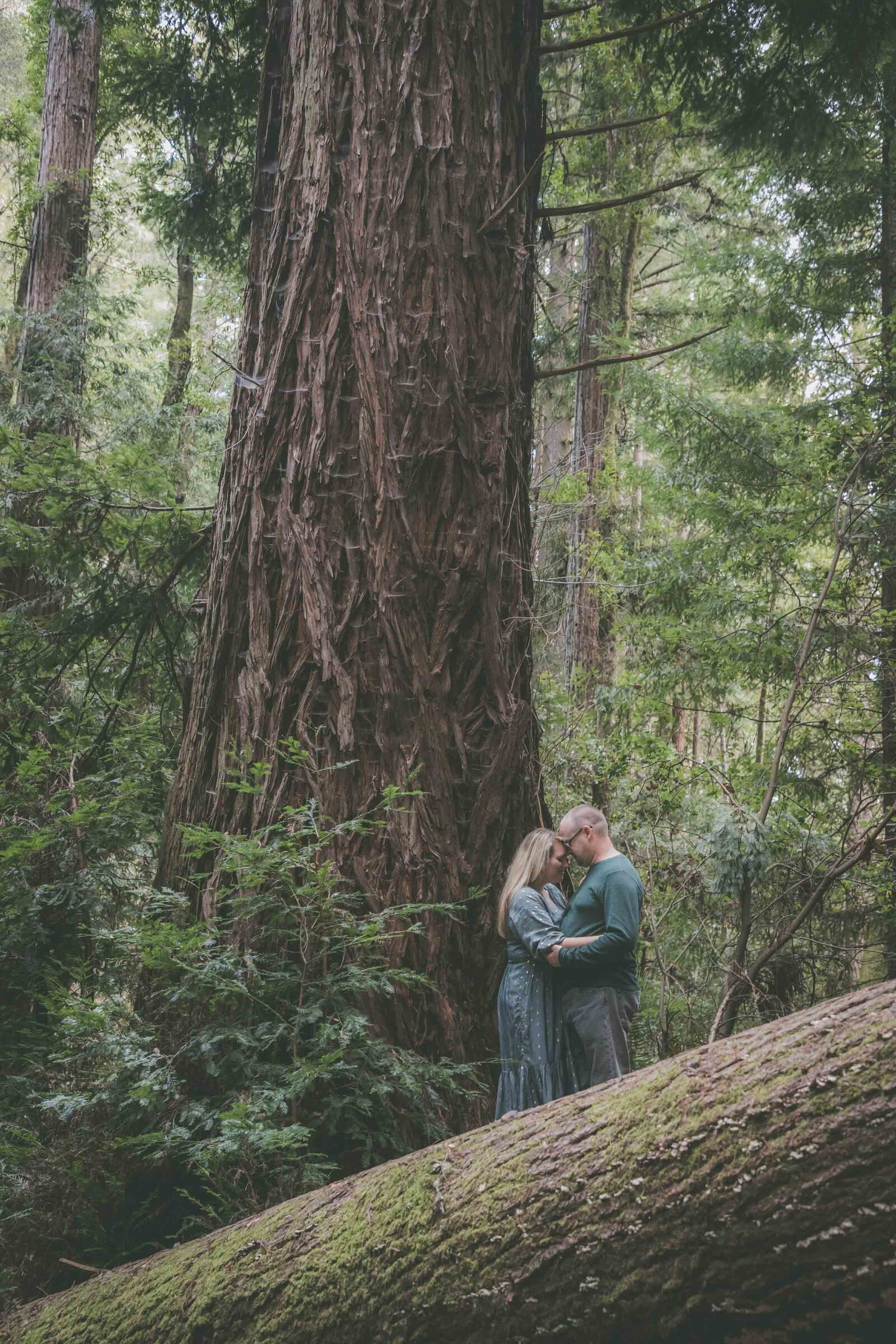 Couple touches foreheads among redwood forest.