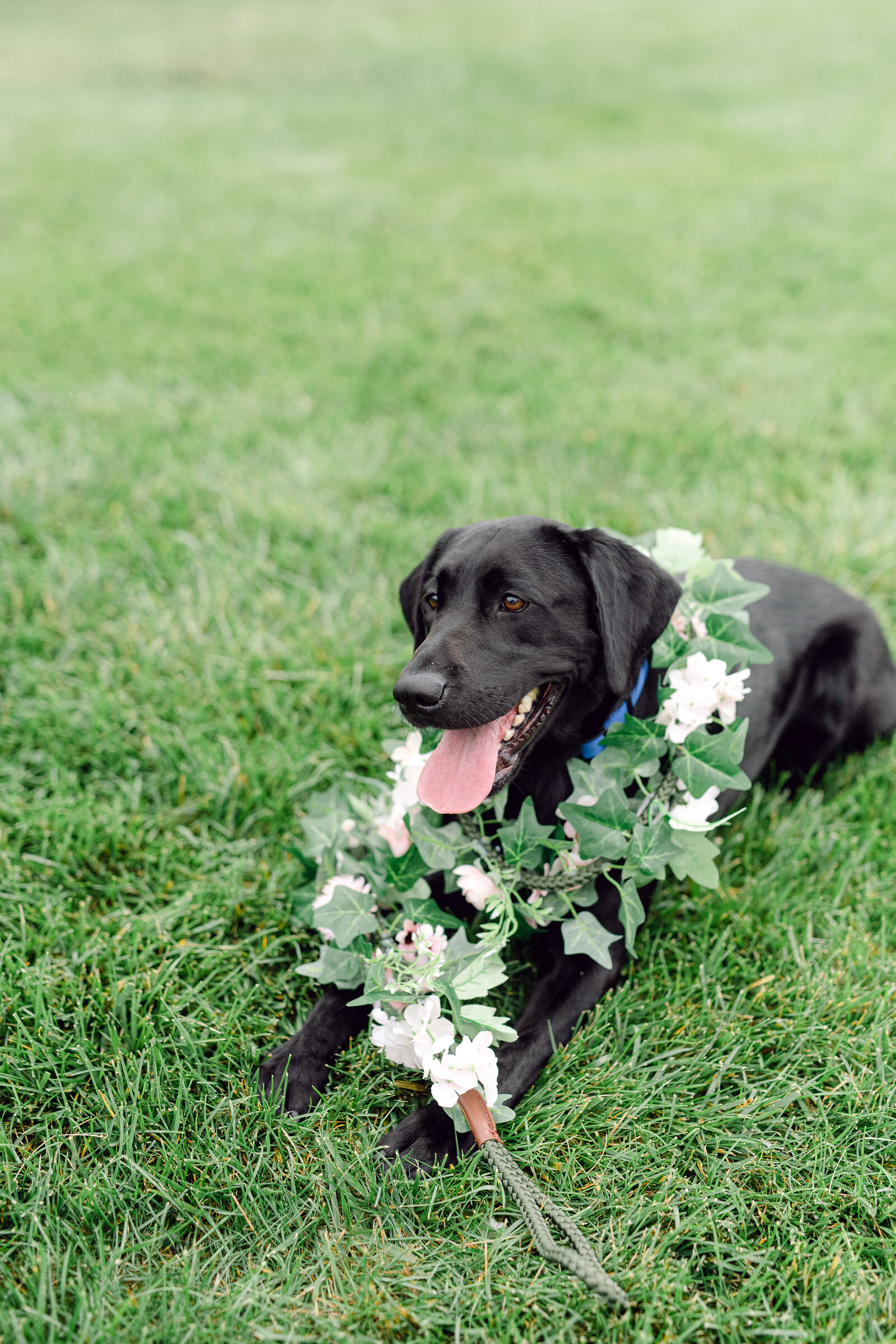wedding_dog_5