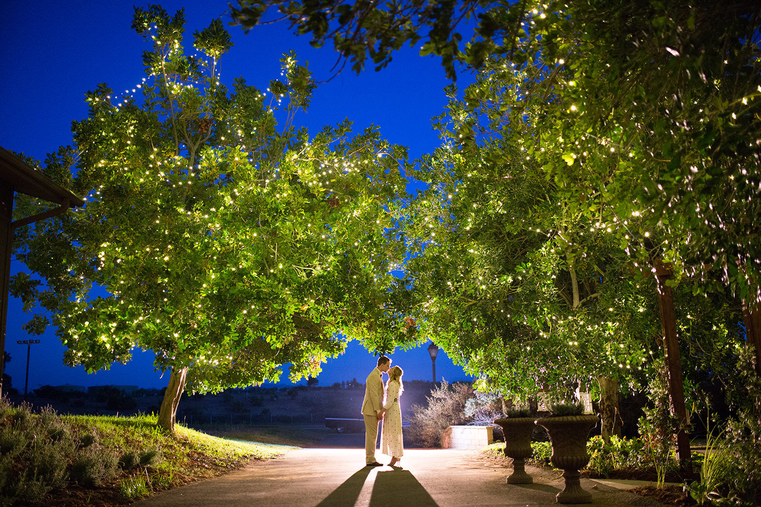 night image of bride and groom with beautiful trees