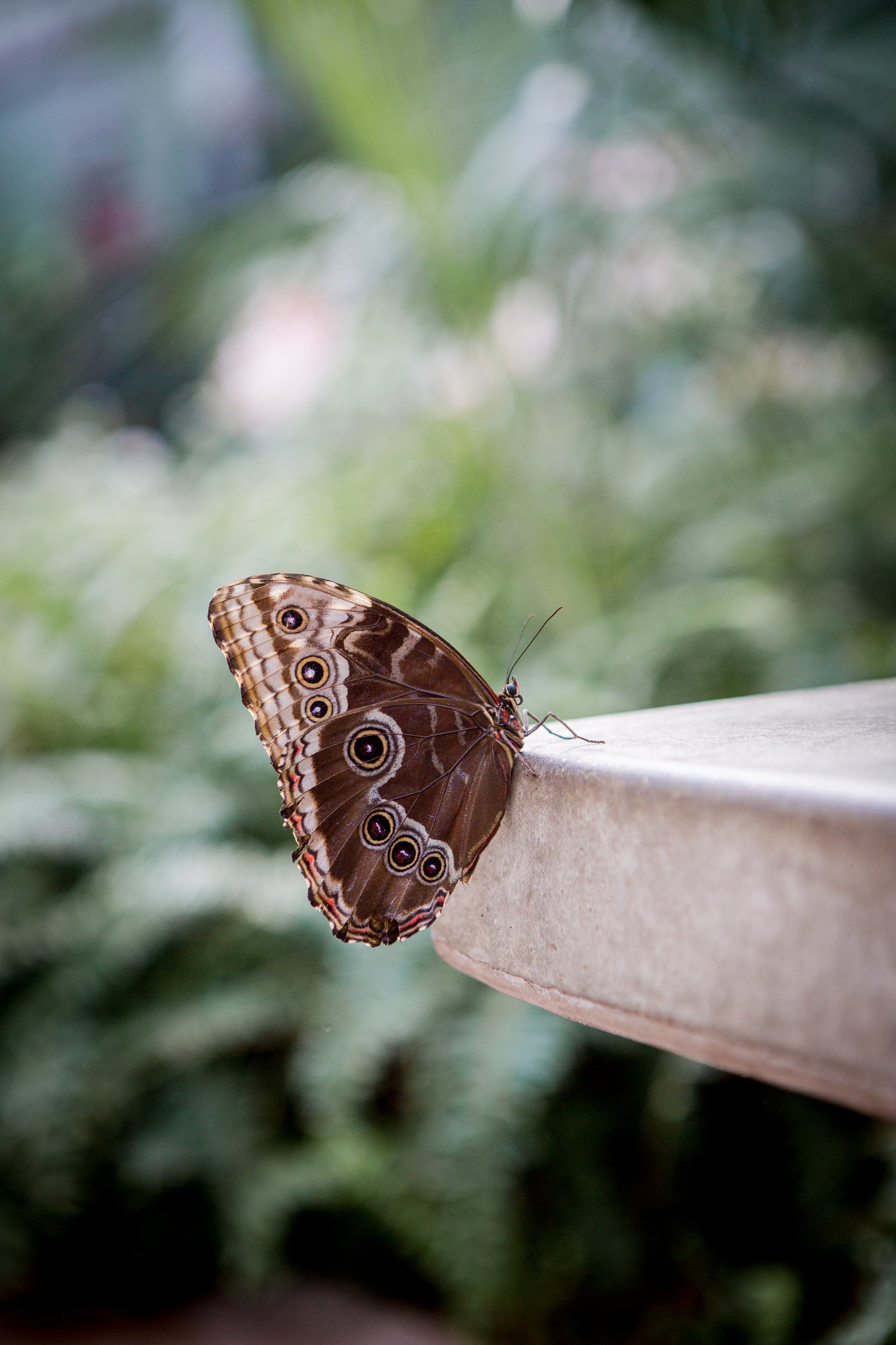 butterfly (143 of 210)