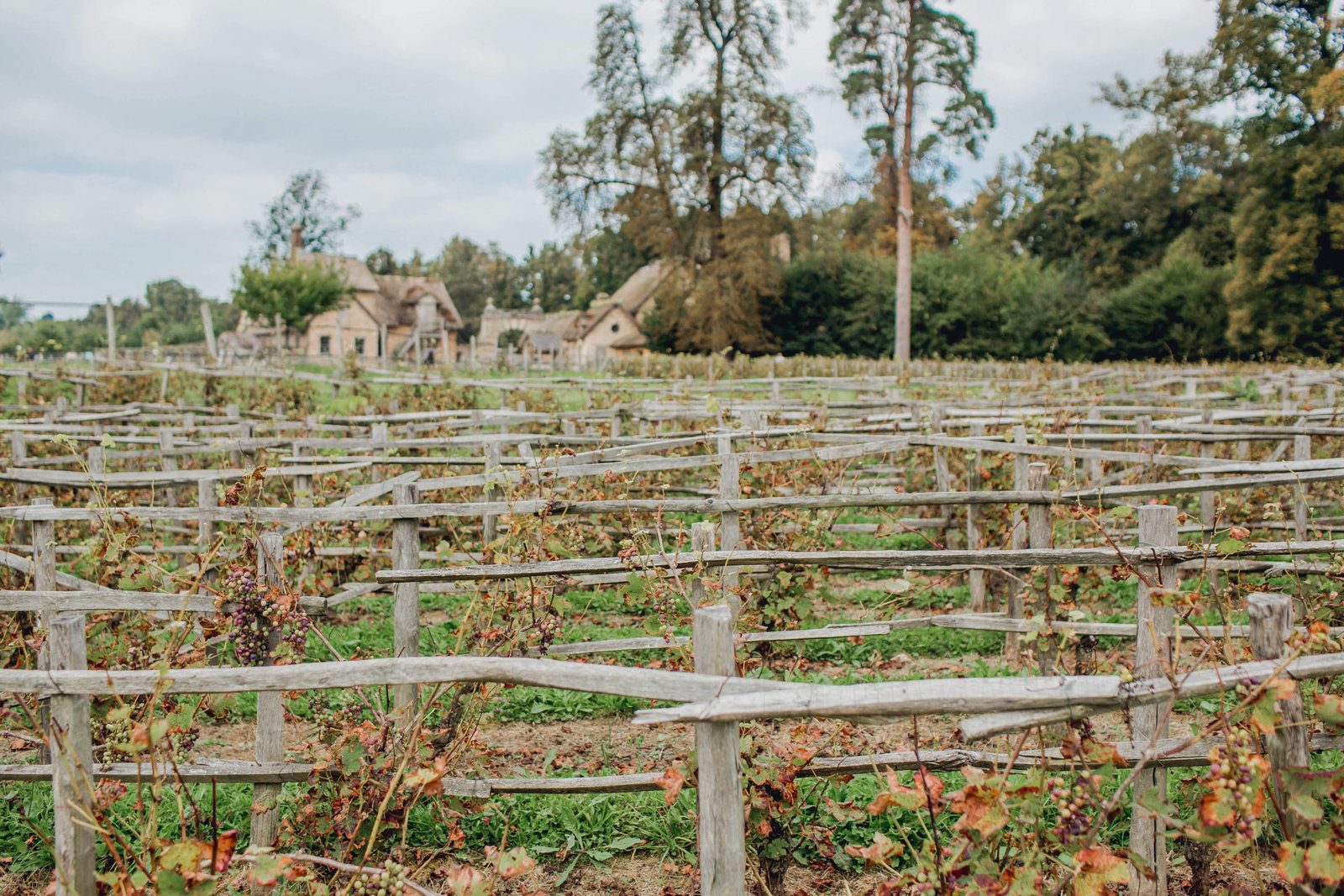 farm-vineyard-marie-antoinette-hamlet-versailles-france-travel-destination-kate-timbers-photography-1694