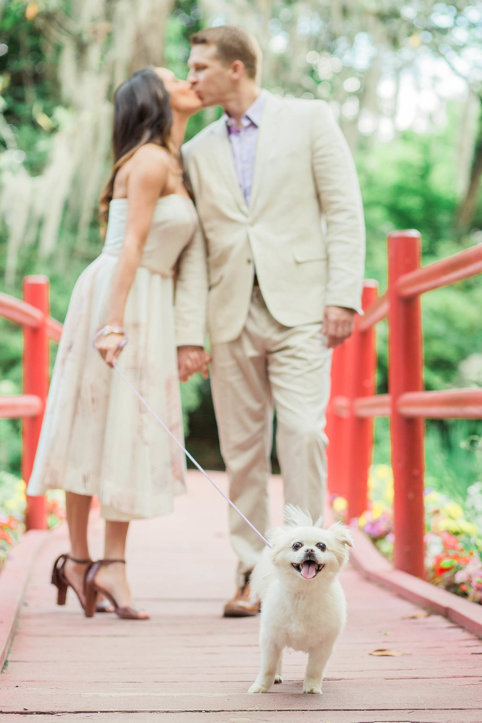 Engaged couple walks little Pomeranian dog down the red bridge, Magnolia Plantation, Charleston, South Carolina
