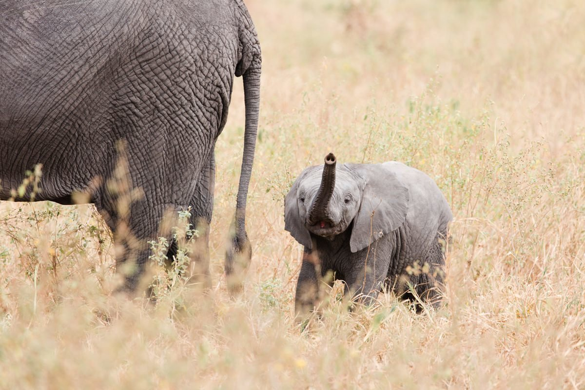 baby-elephant-tanzania-destination-photographer