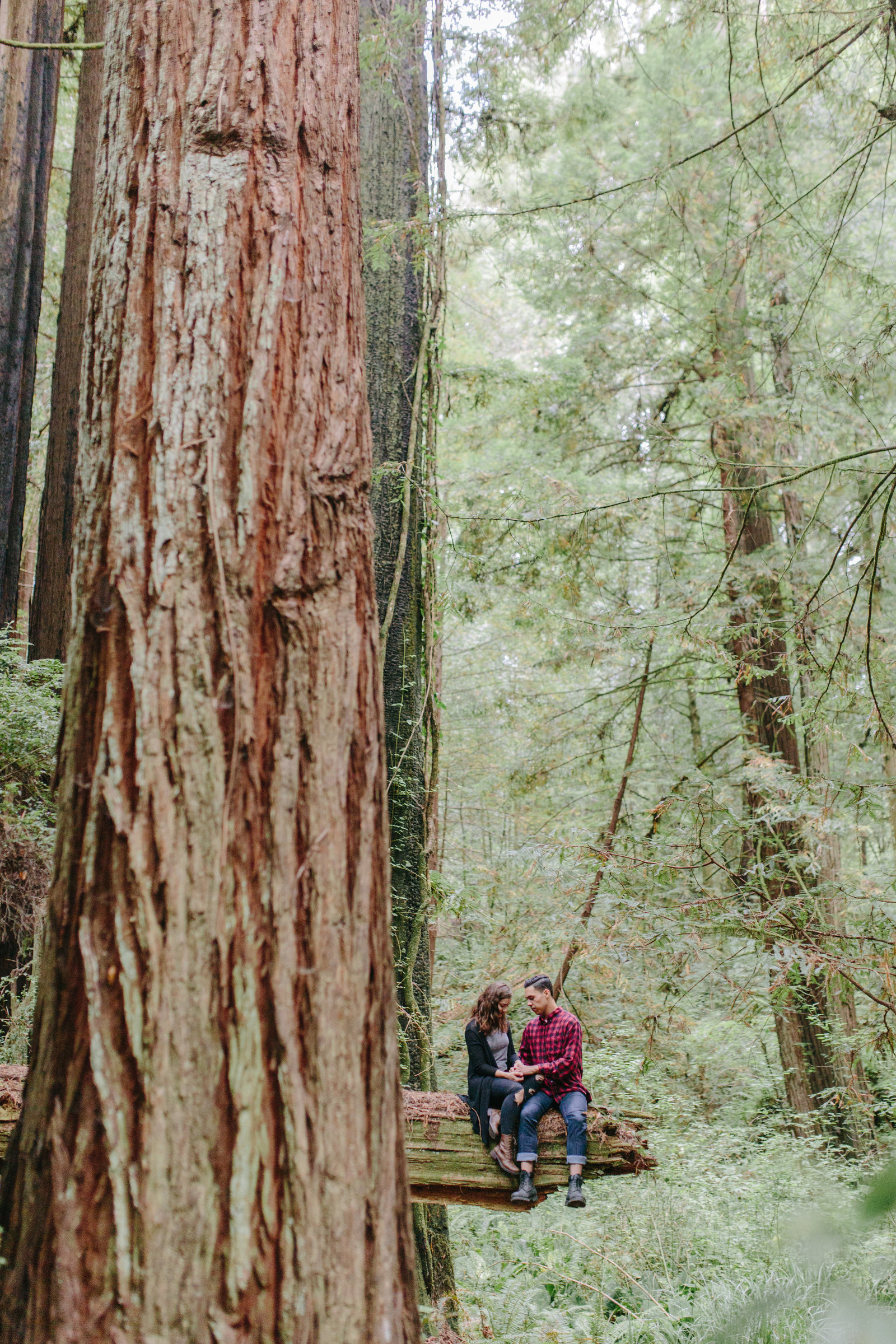Redwood National Park Avenue of the Giants Engagement Session -7709