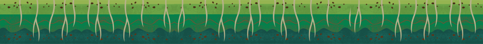Wholesome-Regen-soil-flat-small-03-01