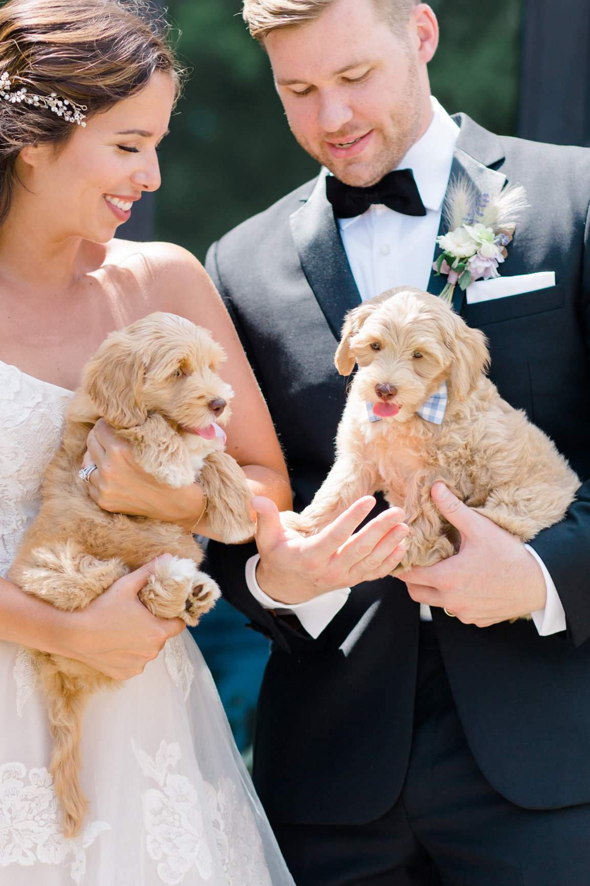 wedding with puppies