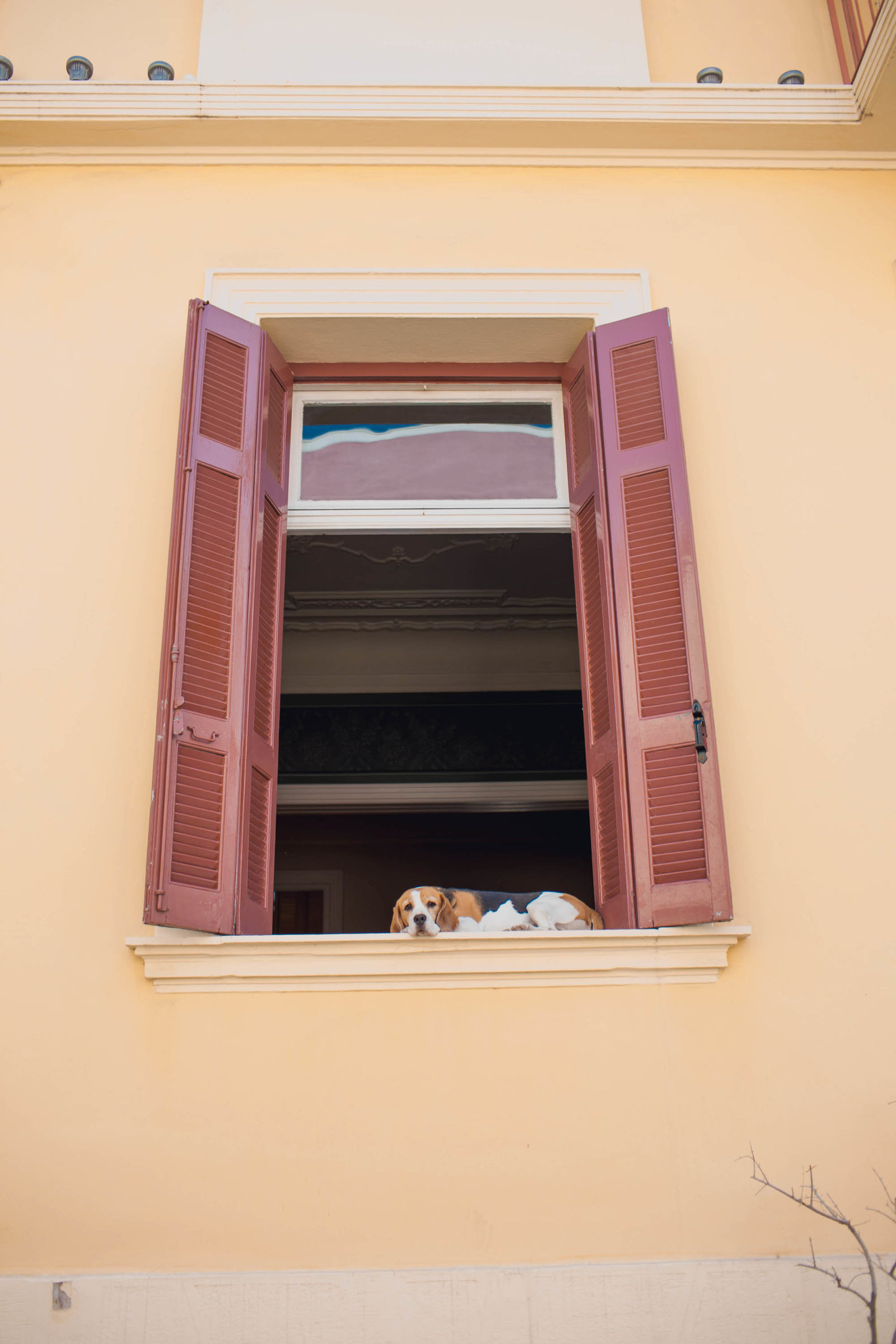dog-window-athens-greece-travel-kate-timbers-photography-878