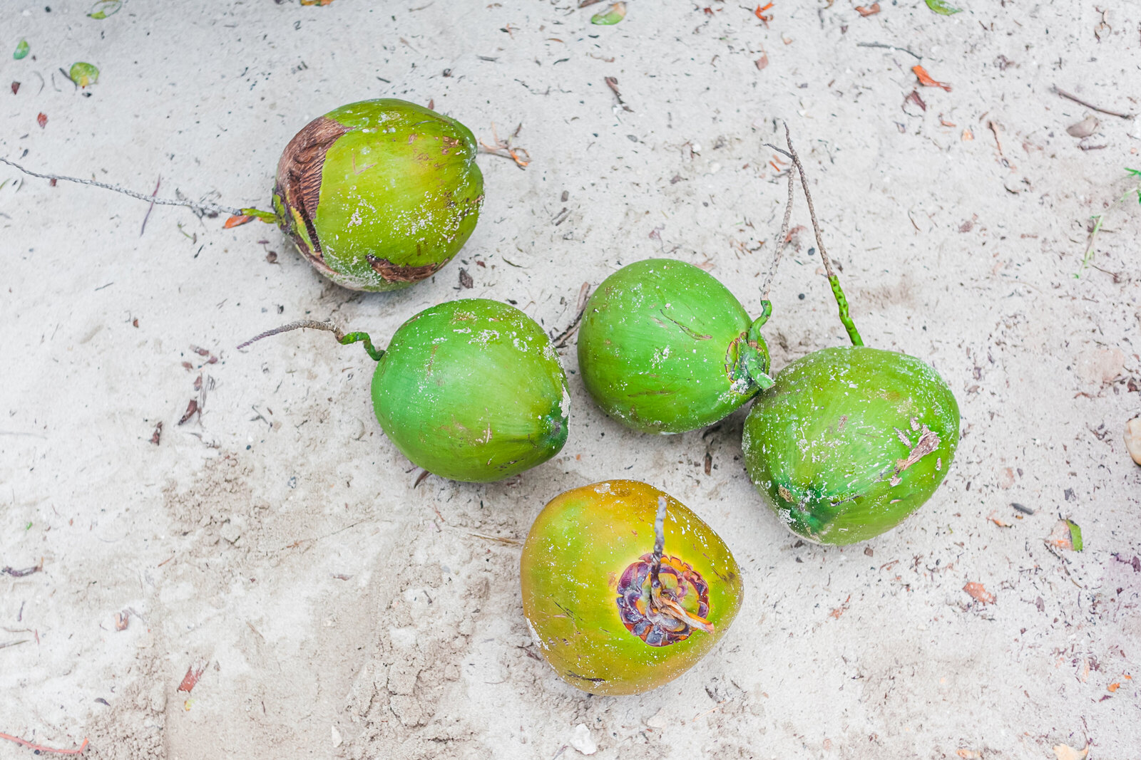 035-KBP-beach-cocnuts-mexico-tulum-vacation