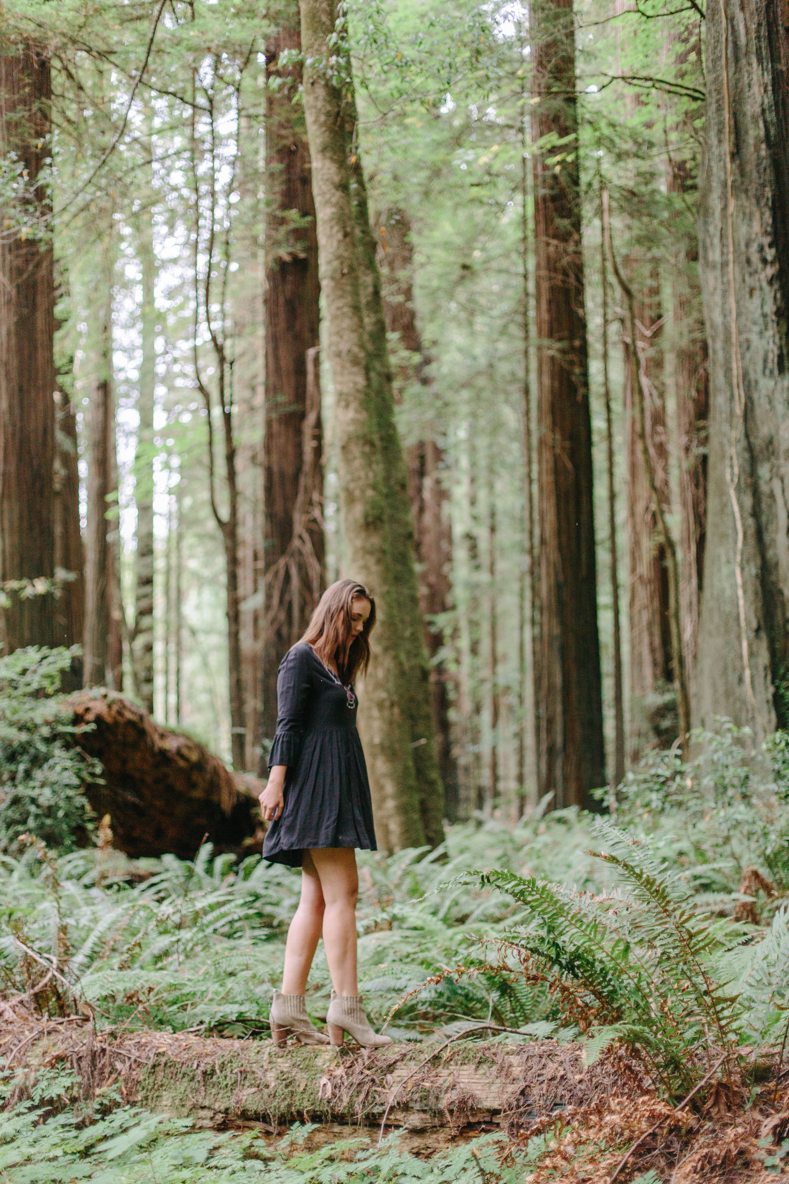 Redwood National Park Avenue of the Giants Engagement Session -7403