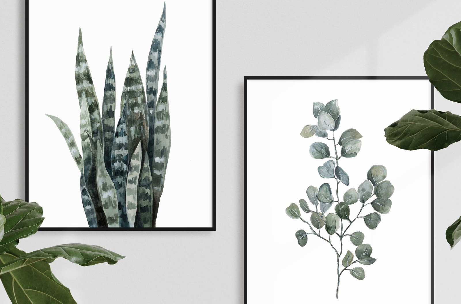 Illustrations - Framed x2 - Snake Plant & Eucalyptus