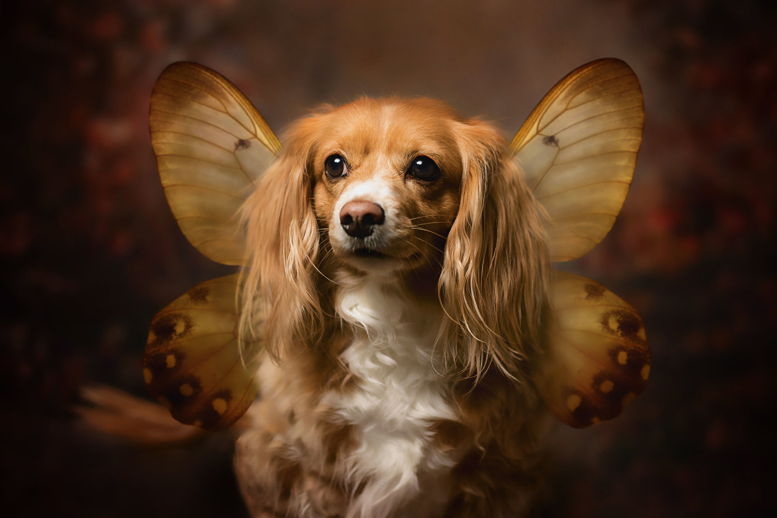 Wings-Dog-Fine Art-Studio.jpg-min