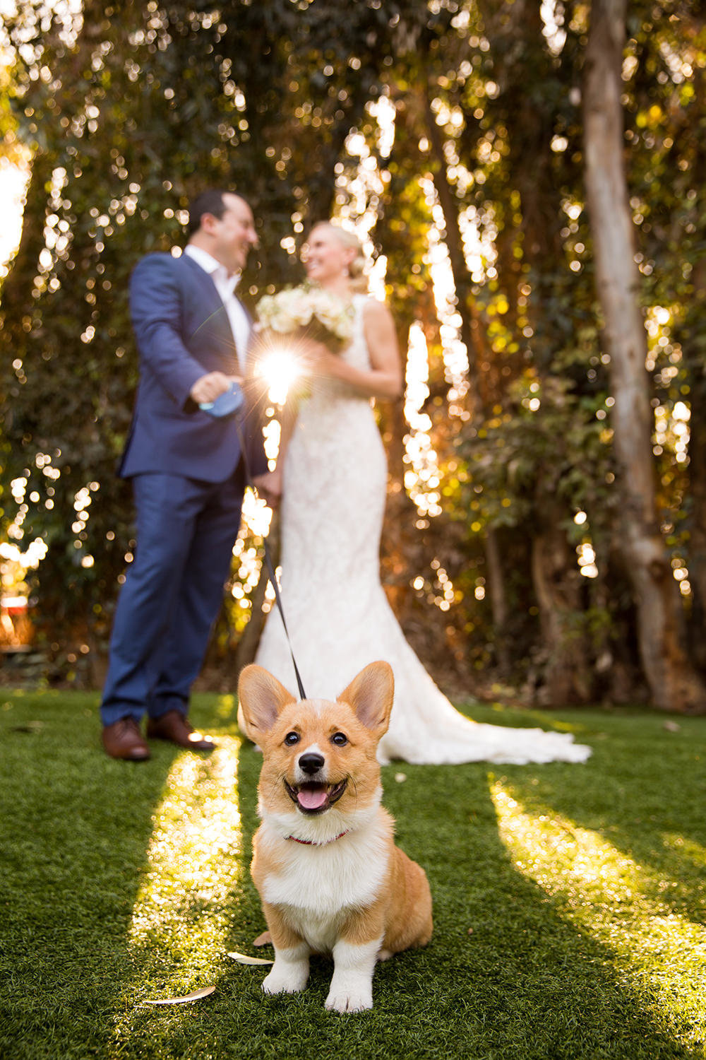 The cutest corgi you will ever see at a wedding