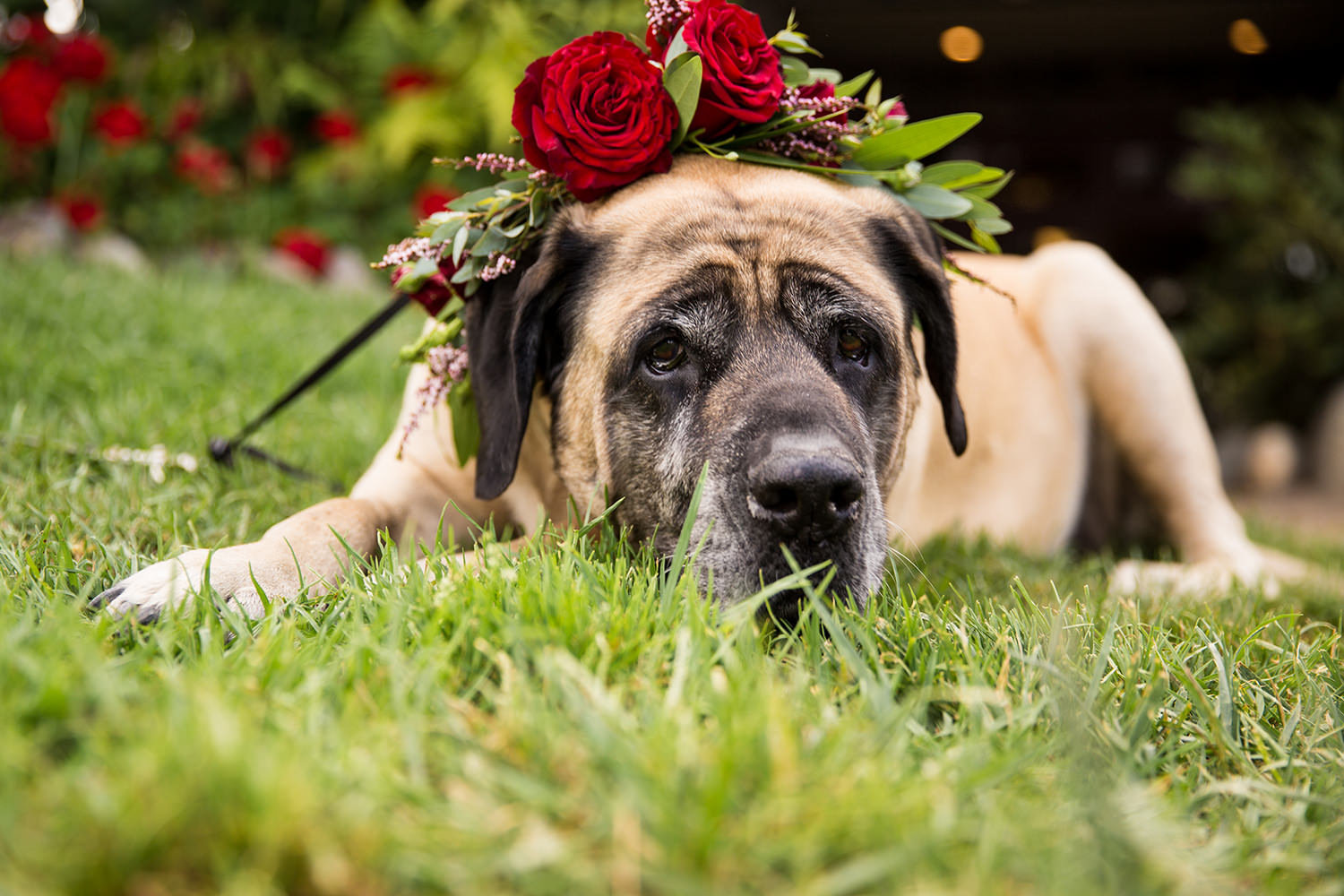cute dog with flower color