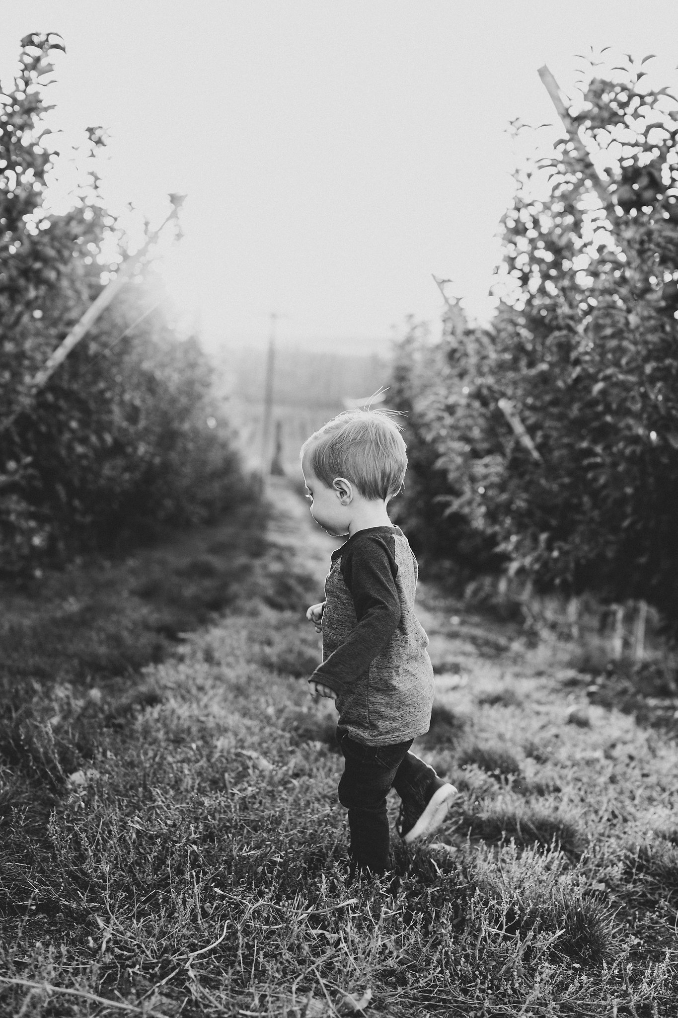 Little boy walking away in an apple orchard