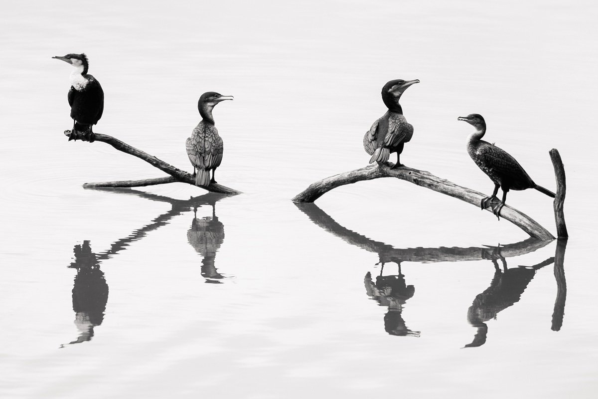 cameron-zegers-travel-photographer-tanzania-cormorant-reflection