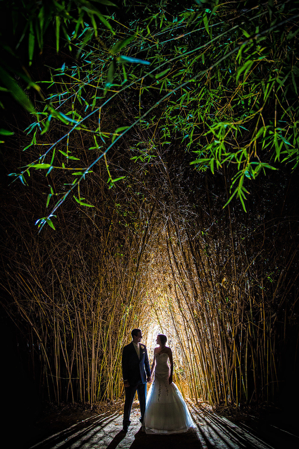night image of couple in the bamboo field