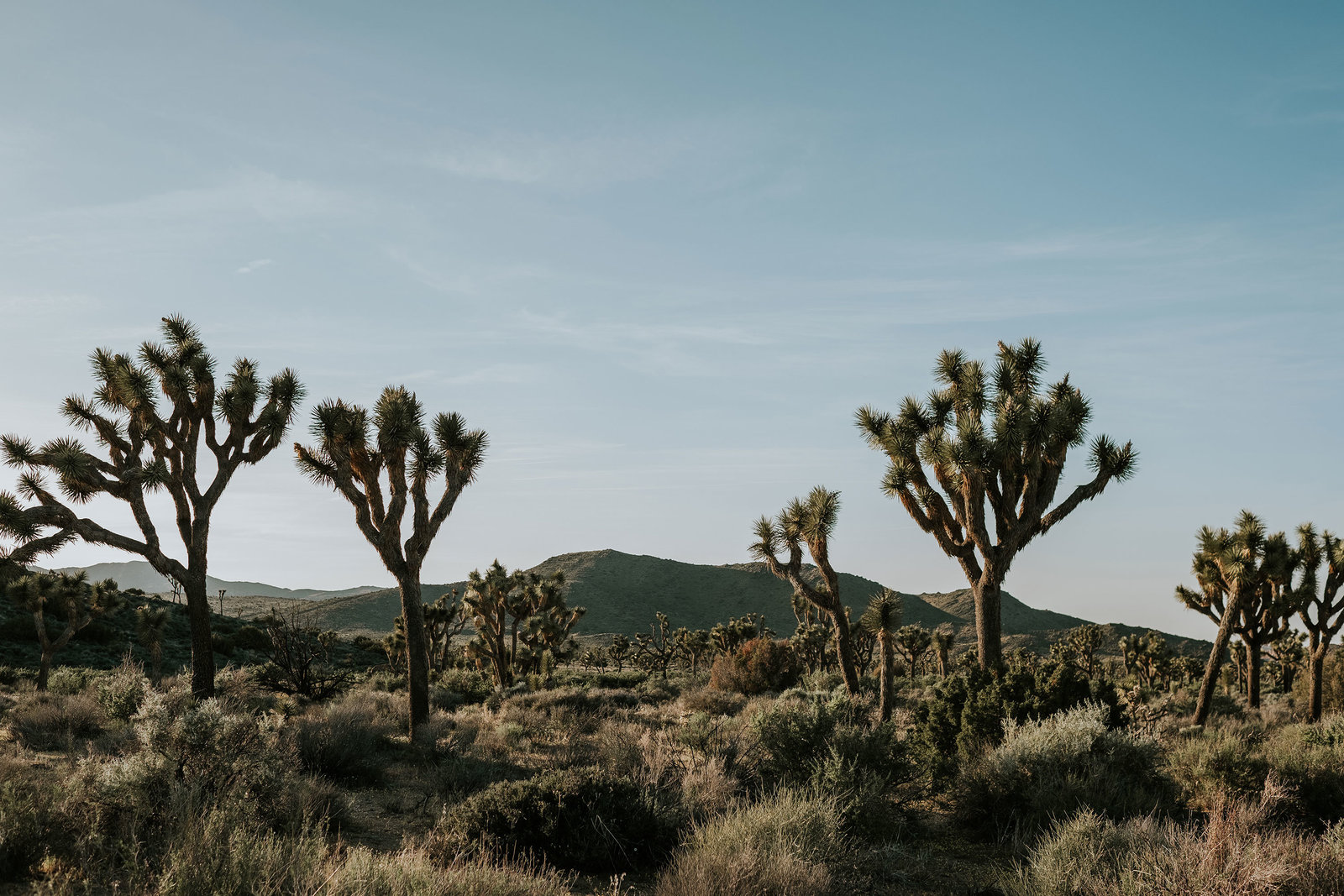 Joshua-Tree-Wedding001