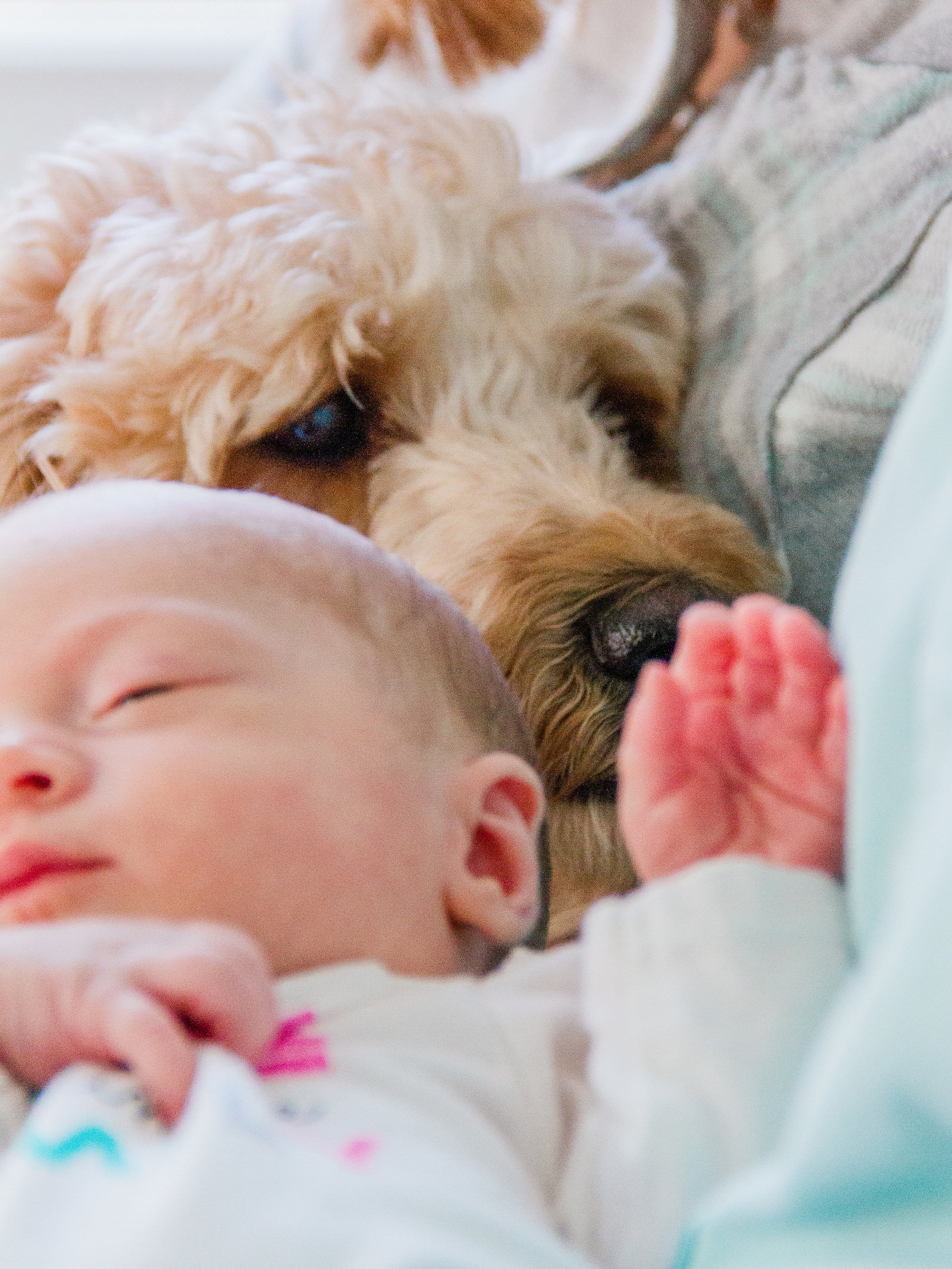 Newborn being held in her mothers arm is being sniffed by her dog