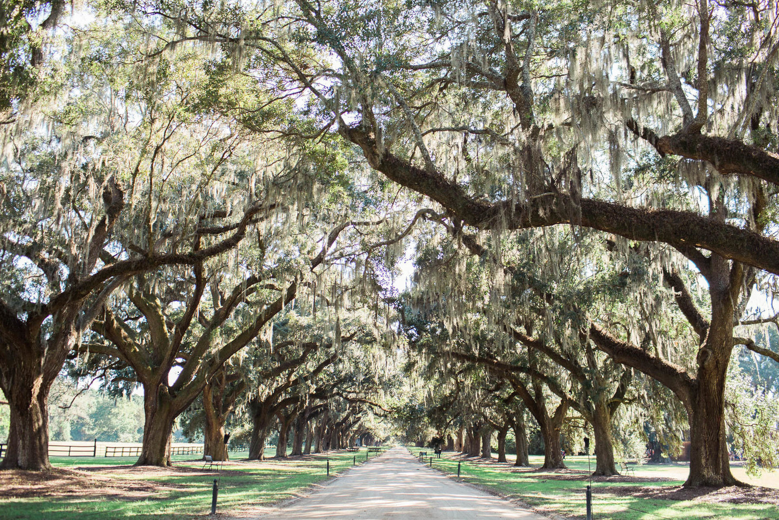 Avenue of Oaks will be where ceremony will be, Boone Hall Plantation, Charleston Wedding Photography.