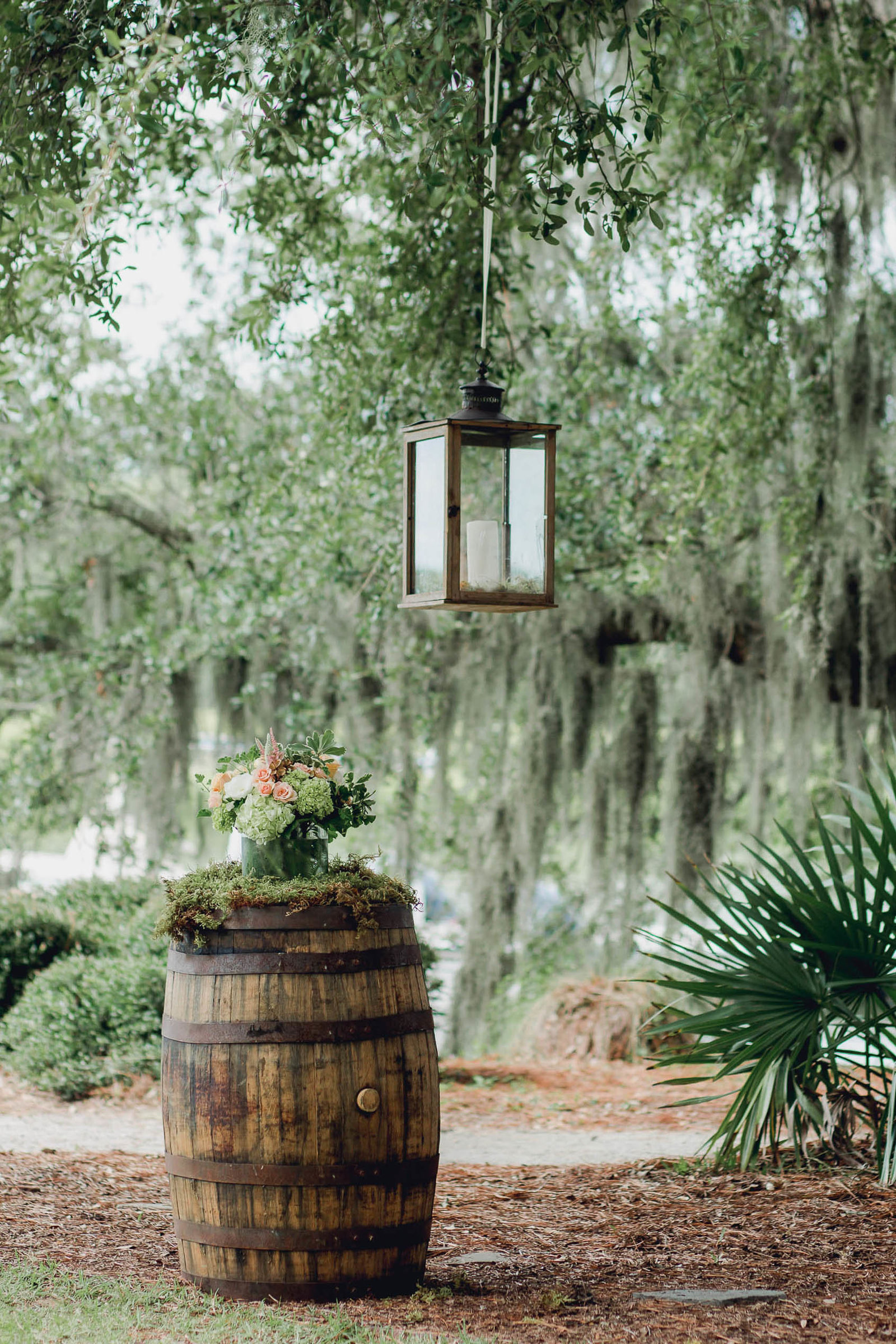 Lanterns hang from tree, Creek Club at I'on, Charleston, South Carolina