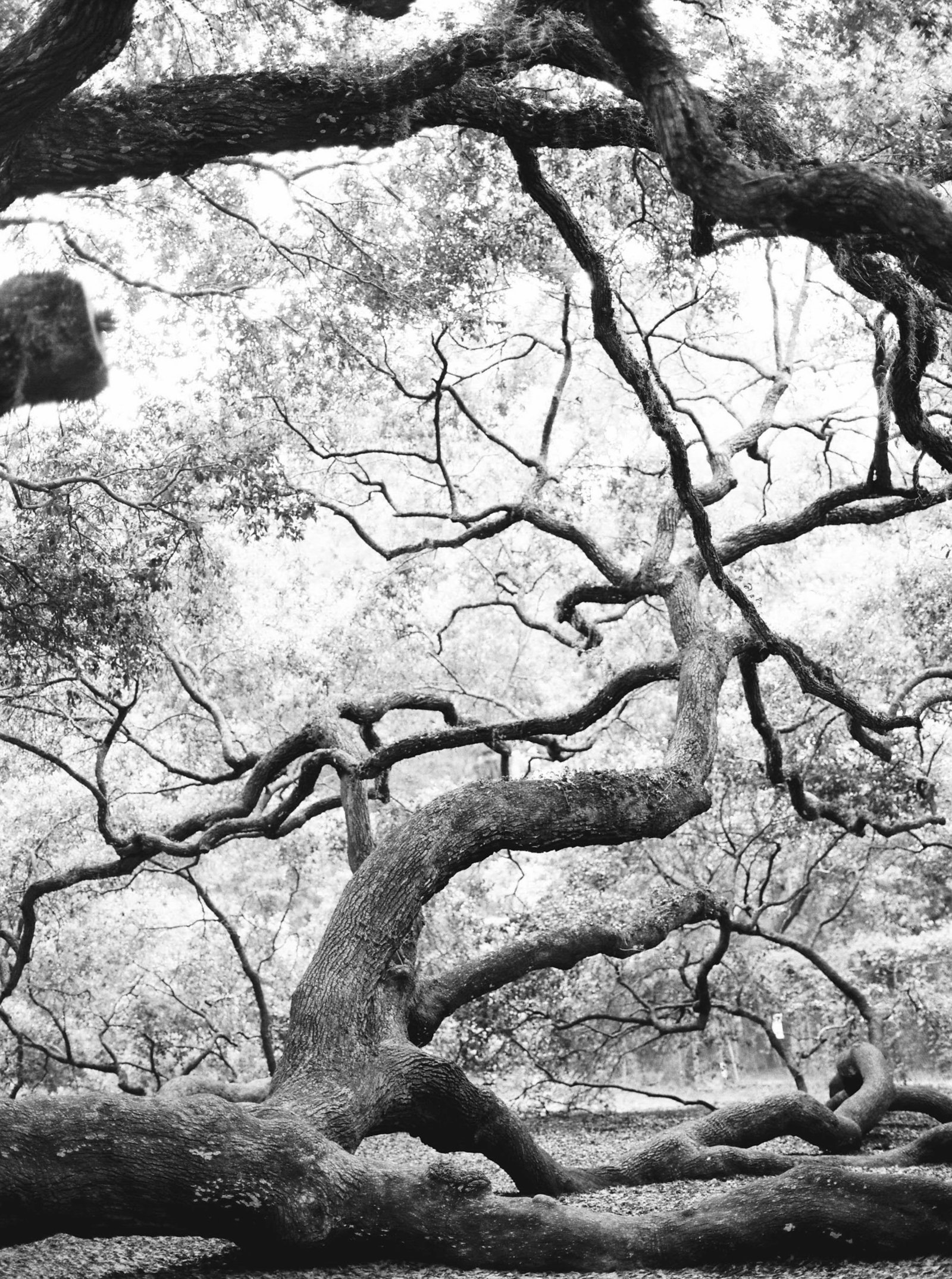 oak-tree-nature-charleston-sc-photography-kate-timbers-778