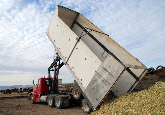 Hoist on Red Truck Dumping Silage