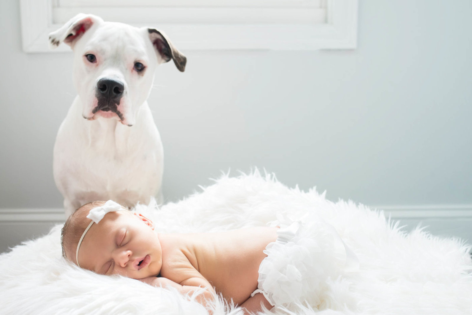 Dog watching over newborn during lifestyle session at home
