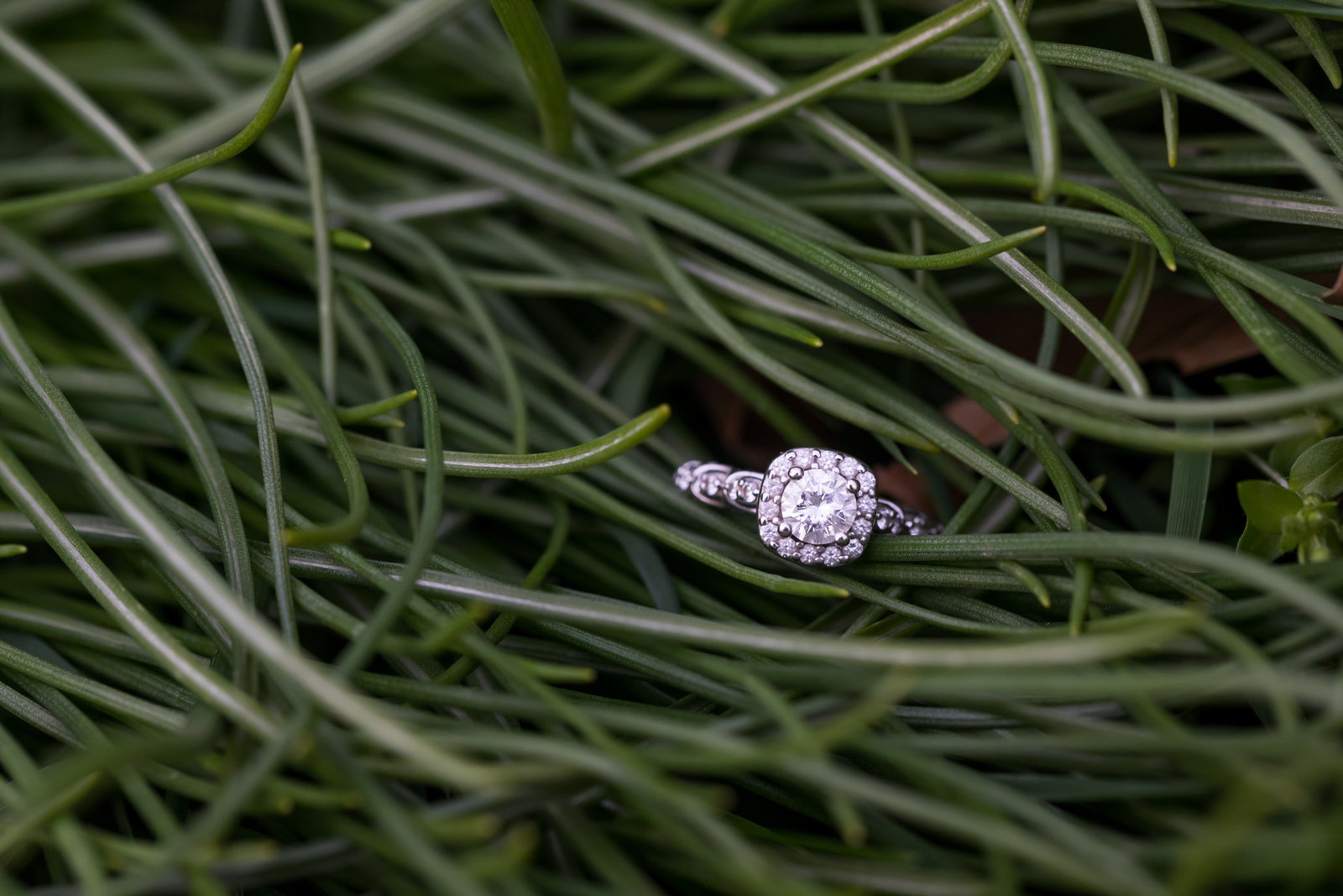 bucks-county-engagement-photographer-ring