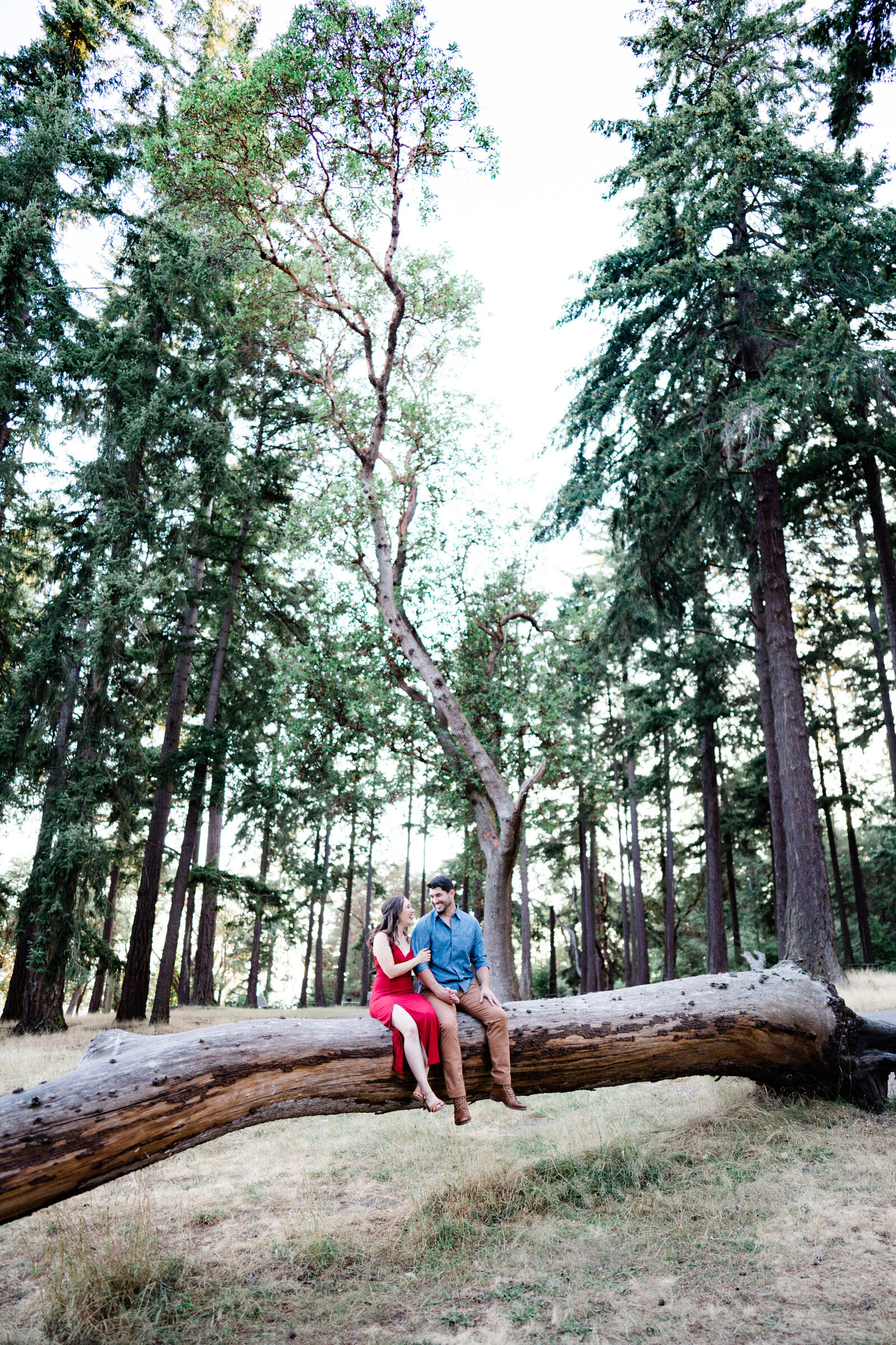 Man and woman sitting on a big tree elebrating their engagement at Lincoln Park, making the list of best places for engagement photos in Seattle