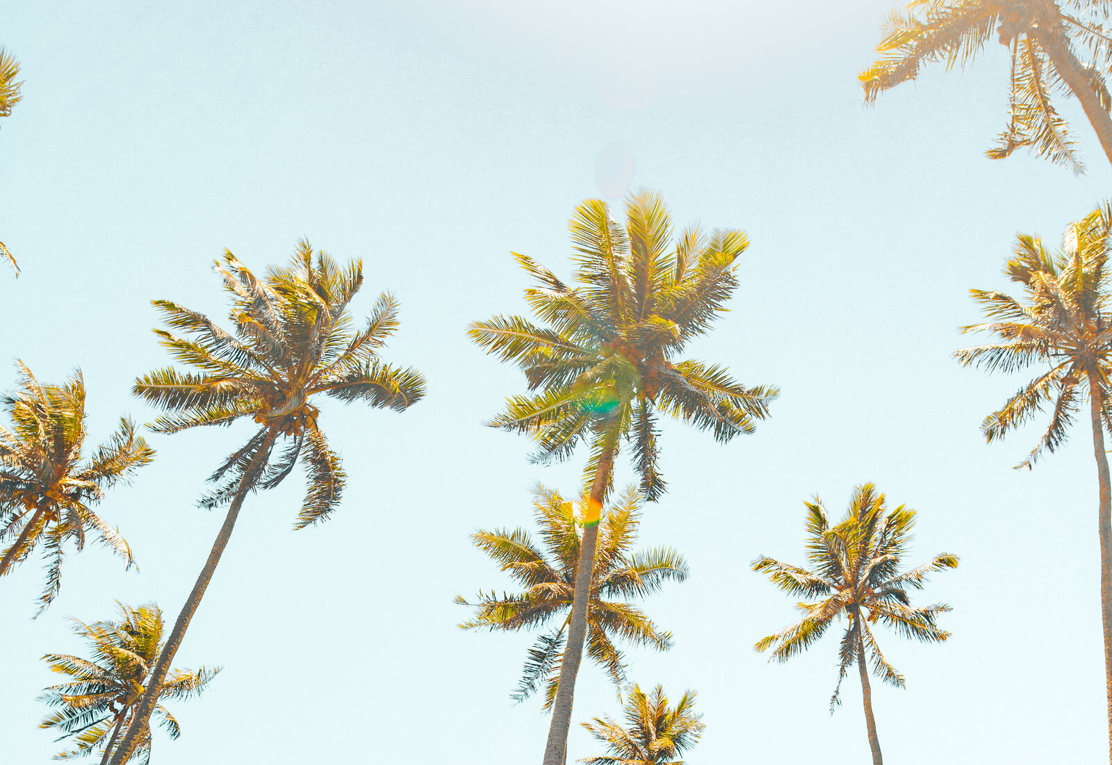 kellyyhill-palm-trees-hawaii