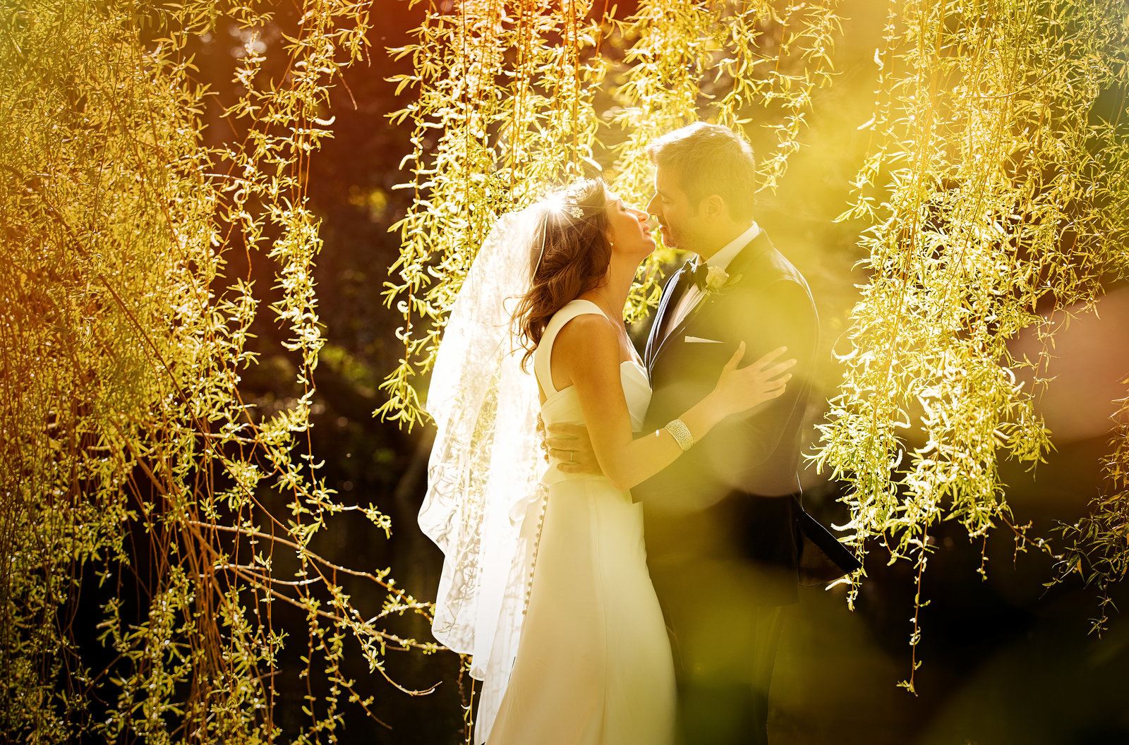 Back light through a willow tree wedding photography at Hodsock Priory