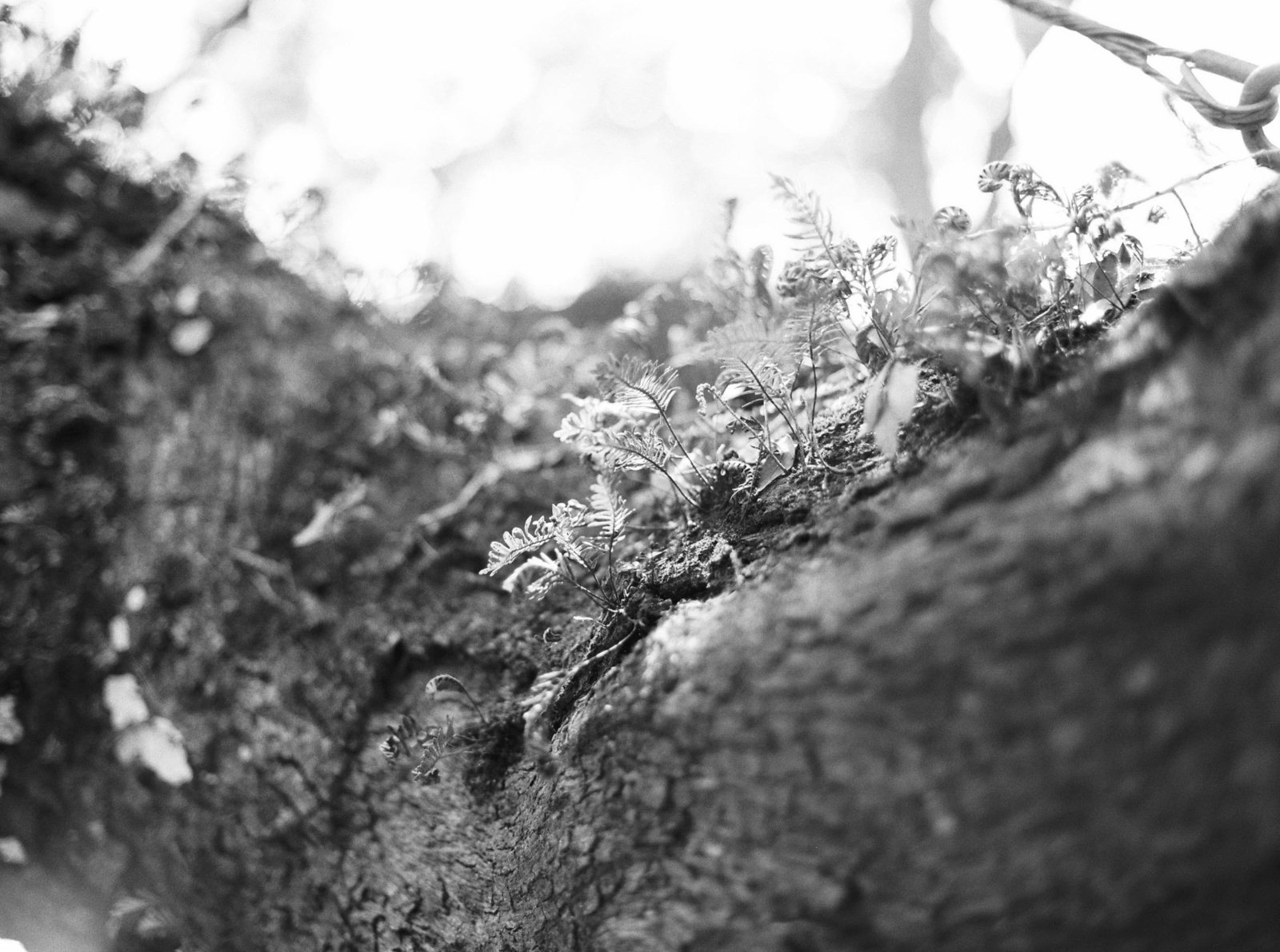 oak-tree-nature-charleston-sc-photography-kate-timbers-780
