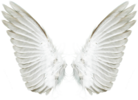 vippng.com-transparent-wings-png-919625