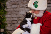 Santa Claus kissing at cat at the Santa Experience in Phoenixville