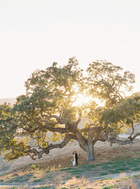 Katie + Jordan Carmel Valley Holman Ranch Wedding Sneak Peeks - Cassie Valente Photography 0011